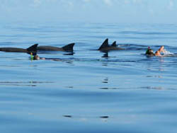Swim with Dolphins and snorkel the Indian Ocean coral reef