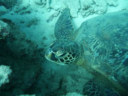 Sea Turtle in the South West